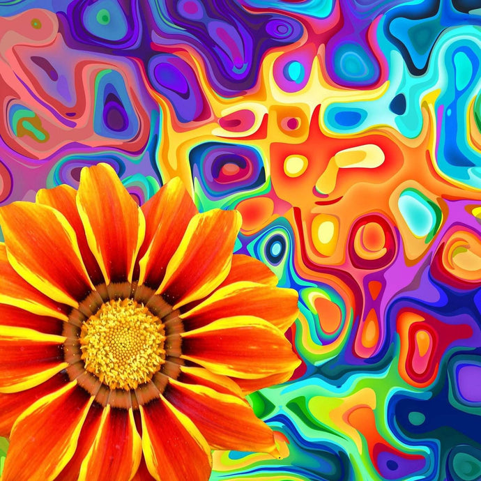 African Daisy Diamond Painting