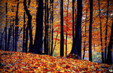 Fall In The Woods Diamond Painting