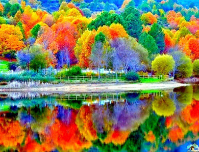 Fall Trees Reflection Diamond Painting