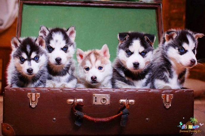 Husky Puppies Diamond Painting