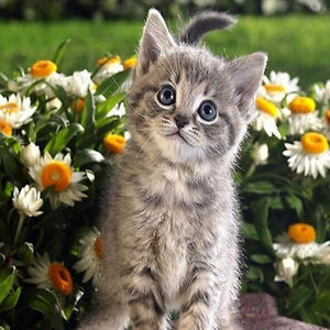 Kitten Sitting In Flowers Diamond Painting