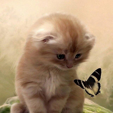 Kitten With Butterfly Diamond Painting