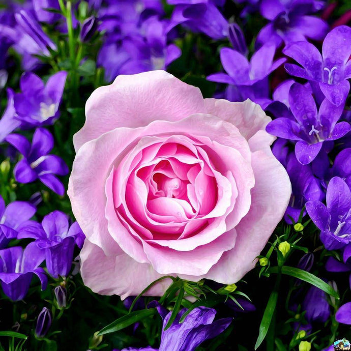 Pink Rose With Purple Flowers  Diamond Painting
