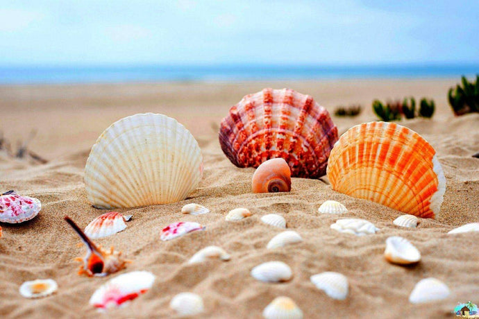 Seashells Diamond Painting