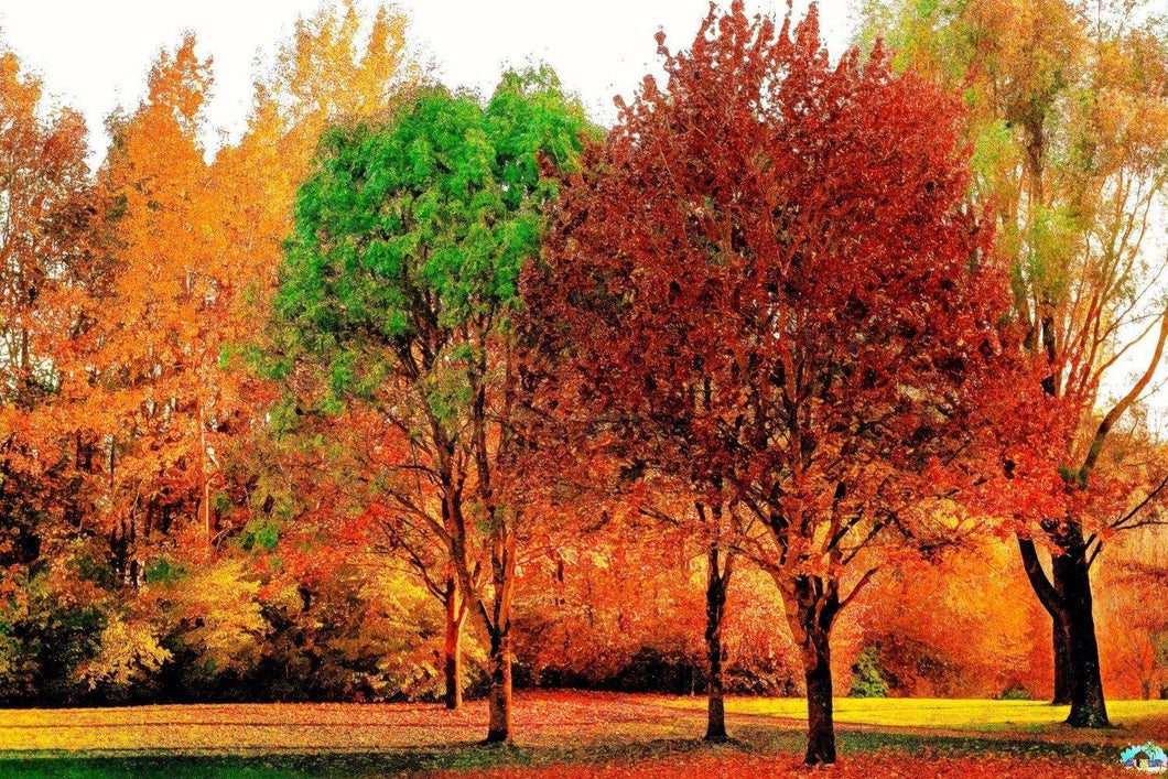 Trees In Autumn Diamond Painting