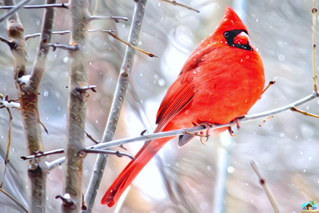 Winter Cardinal Bird Diamond Painting