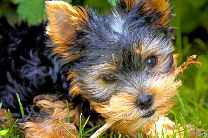 Yorkie Puppy With Stick Diamond Painting