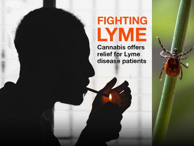 Fighting Lyme