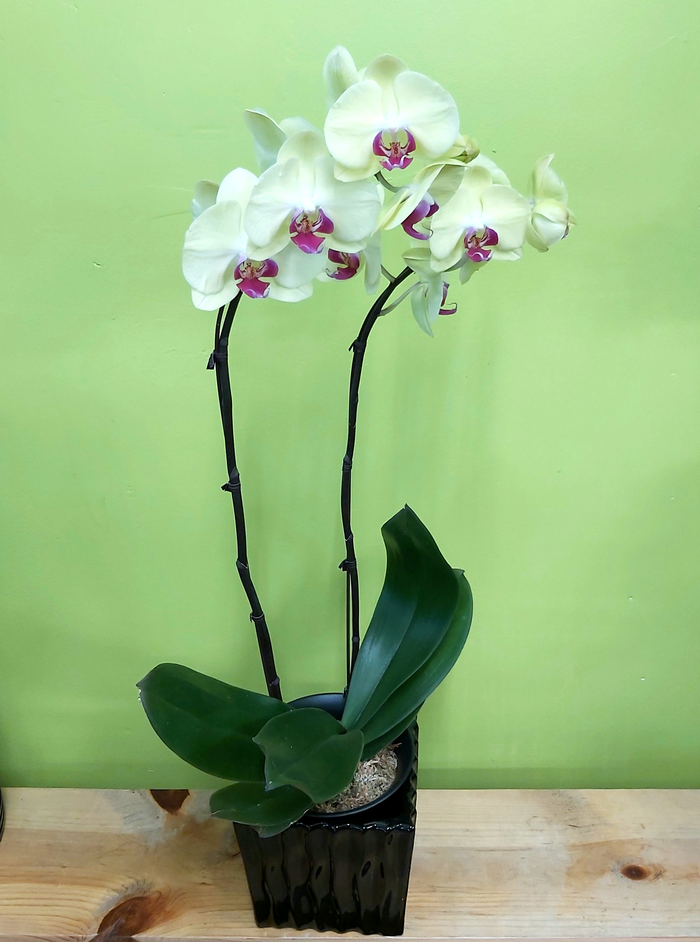 HO-14 Yellow Orchid planter