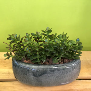 HP-090 Baby Jade Planter