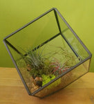 HP-023 Air plant Terrarium