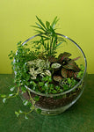 HP-03 Tropical Garden Terrarium