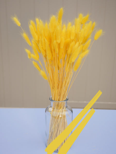 Bunch of Dried Yellow Bunny Tails