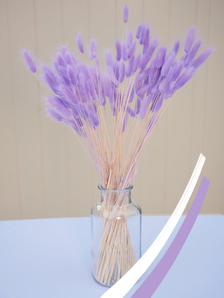 Bunch of Dried Lilac Bunny Tails