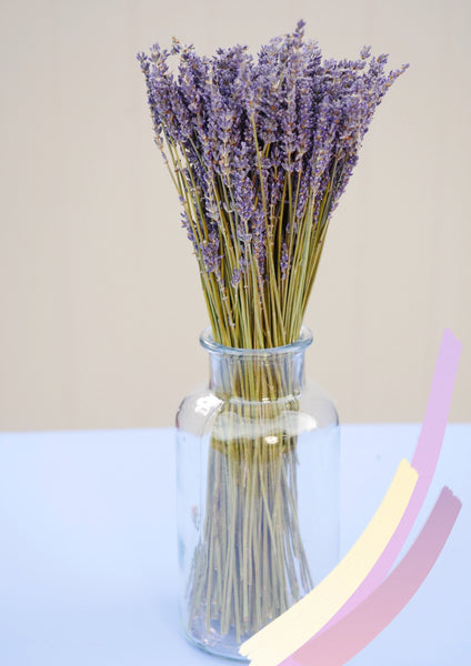 Bunch of Dried Natural Lavender