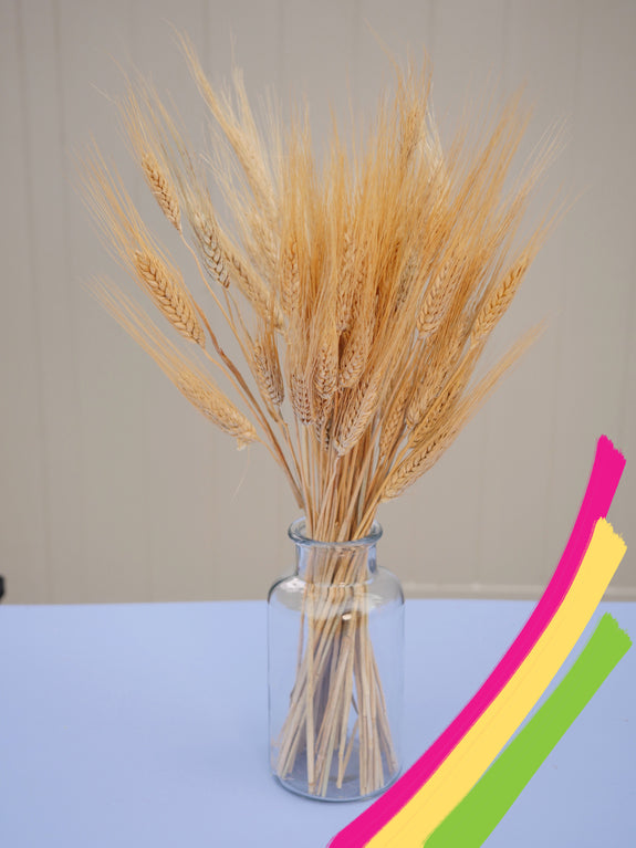Bunch of Dried Natural Wheat