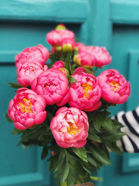 Peony Hand-Tied Bouquet Workshop - Saturday 16th May 2020 3-5pm