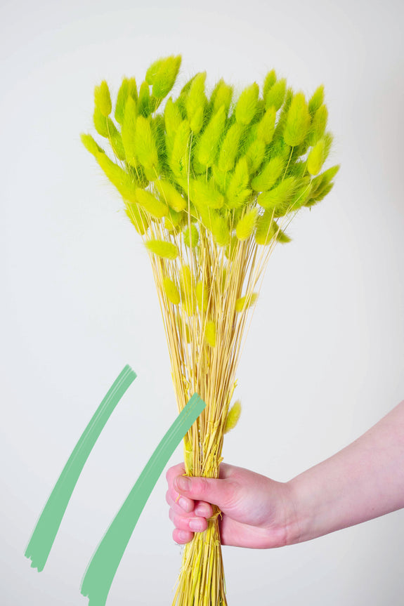 Bunch of Dried Apple Green Bunny Tails
