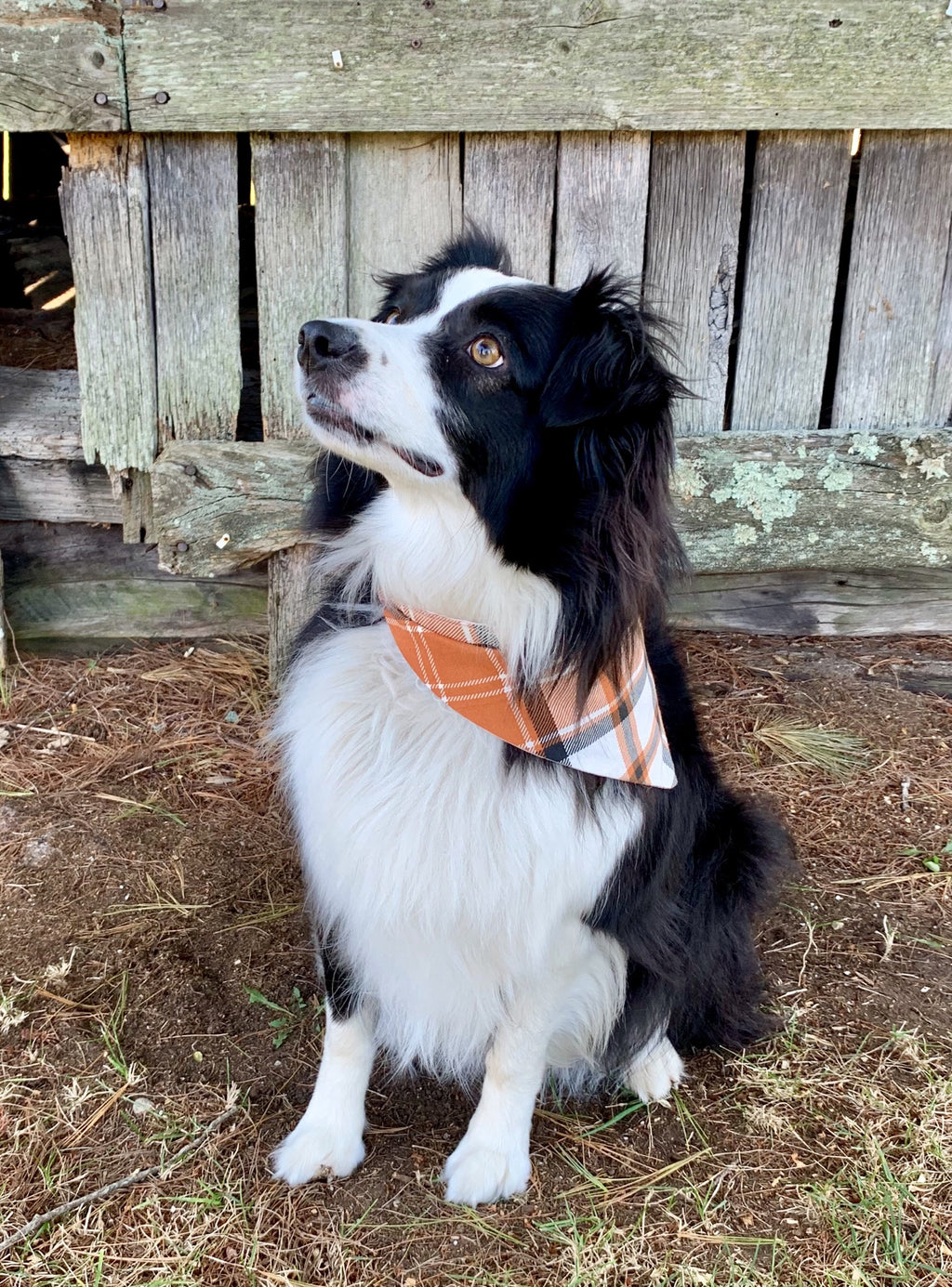 Pumpkin Spice Latte Dog Bandana