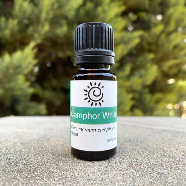 Camphor White Essential Oil