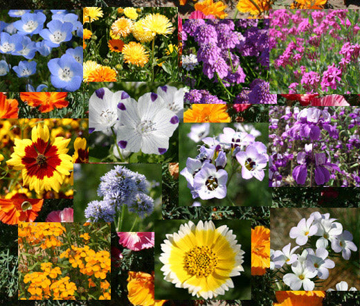 Wildflower Mix Bulb Blanket Seeds