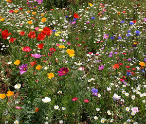 Wildflower Mix Cascade Kaleidoscope Seeds