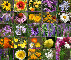 Wildflower Mix Cascade Perennial Seeds