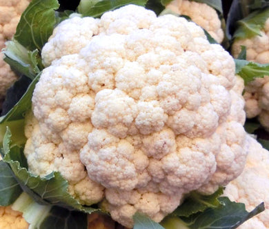 Cauliflower Snow Ball Organic Seeds - Brassica Oleracea