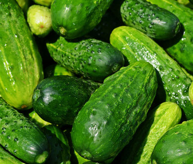 Cucumber National Pickling Organic Bulk Seeds - Cucumis Sativus