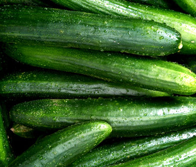 Cucumber Straight Eight Organic Bulk Seeds - Cucumis Sativus