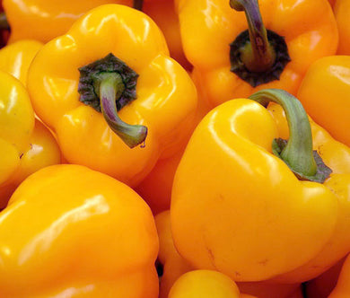 Pepper Sweet Golden California Wonder Organic Seeds - Capsicum Annuum