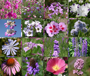 Wildflower Mix Purple Bulk Seeds