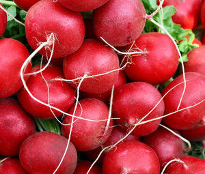 Radish Champion Organic Seeds - Raphanus Sativus