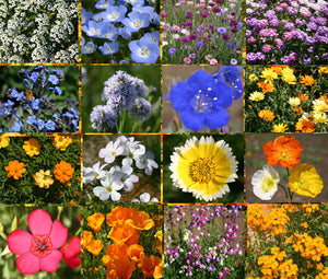 Wildflower Mix Short Creek Bulk Seeds