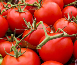 Tomato Large Red Cherry Organic Seeds - Lycopersicon Esculentum