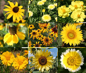 Wildflower Mix Yellow Seeds
