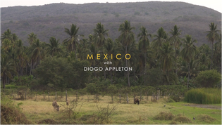 Mexico with Diogo Appleton - New Video