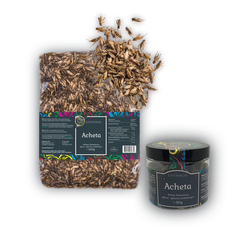 Edible House Crickets Dried | Acheta Domesticus | From the EU