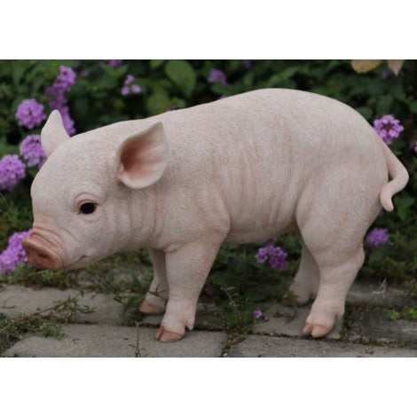 STANDING BABY PIG