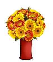 SEASONAL COLOR SOLITAIRE GERBERA DAISIES