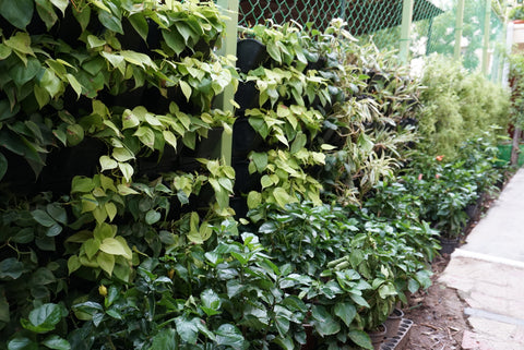 With The Lack Of Space A Major Constraint In Having A Garden, Wall Garden/ Vertical  Garden/ Green Wall Is Considered To Be The Perfect Solution.