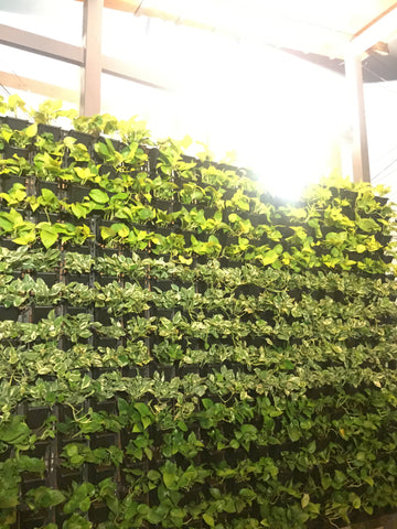 Vertical Garden at Sundari Silks, T Nagar (Chennai)