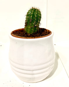 Miniature Pot 3