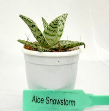 Load image into Gallery viewer, Aloe Snowstorm
