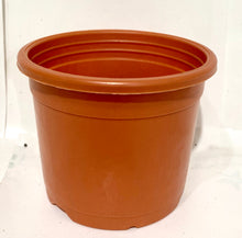 "Load image into Gallery viewer, Sunrise Pot 3"" (8.5 cms) - Nursery Pot"