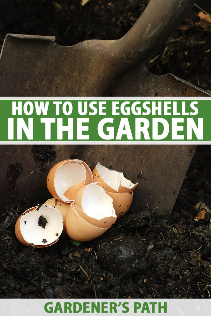 While eggs may be the delight of many home cooks, eggshells can be the bane of many home composters.