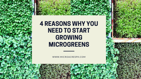 Why grow microgreens?