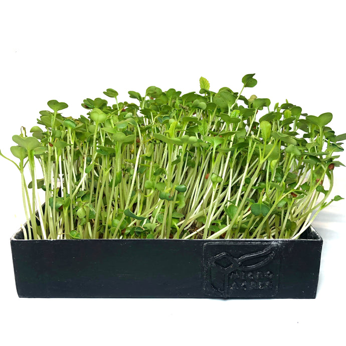 Microgreens Tray (Black)