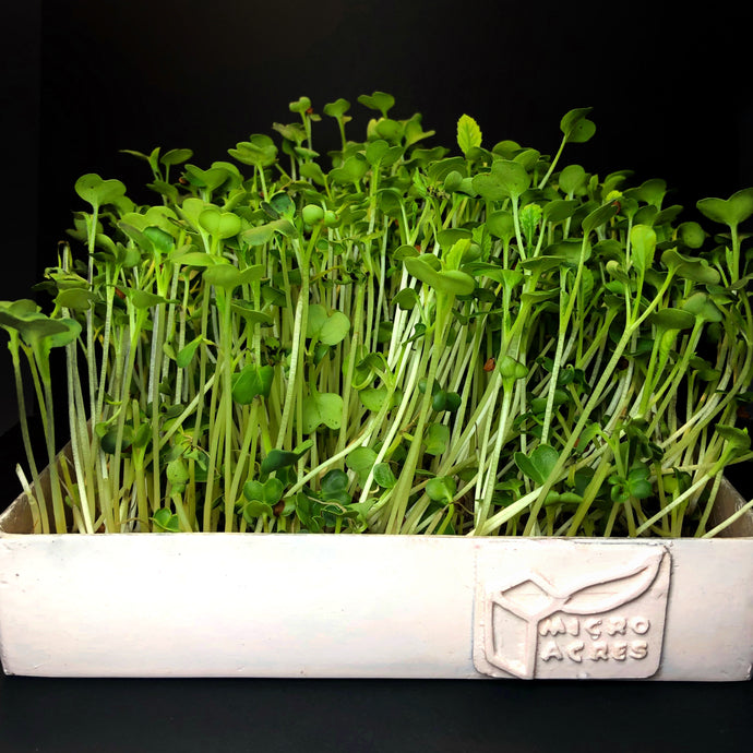 Microgreens Tray (White)
