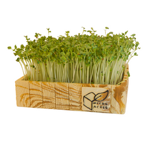 Load image into Gallery viewer, DELUXE Microgreens Starter Kit (Wood Design)